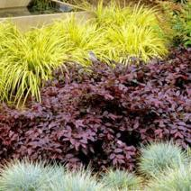 garden maintenance using foliage colour instead of flowers